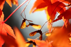 1309285_autumn_leaves