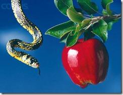 snake apple